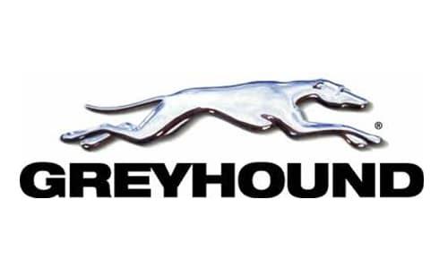 greyhound1